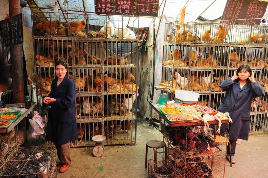 Chicken Market in China