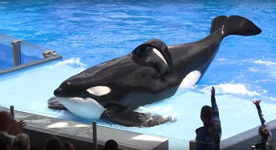 Orcas will no longer be forced to perform tricks for spectators.