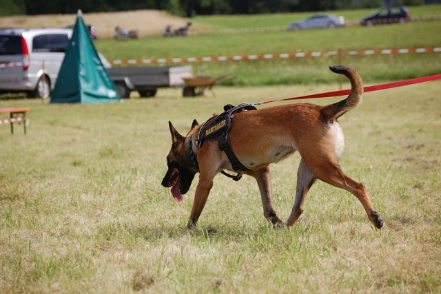 K9 units use specially trained dogs to locate drugs
